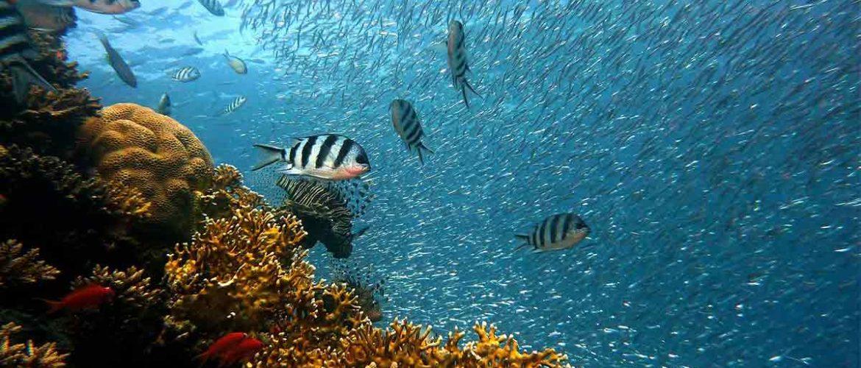 Los océanos podrían 'curarse' en 30 años como consecuencia del Covid 19.